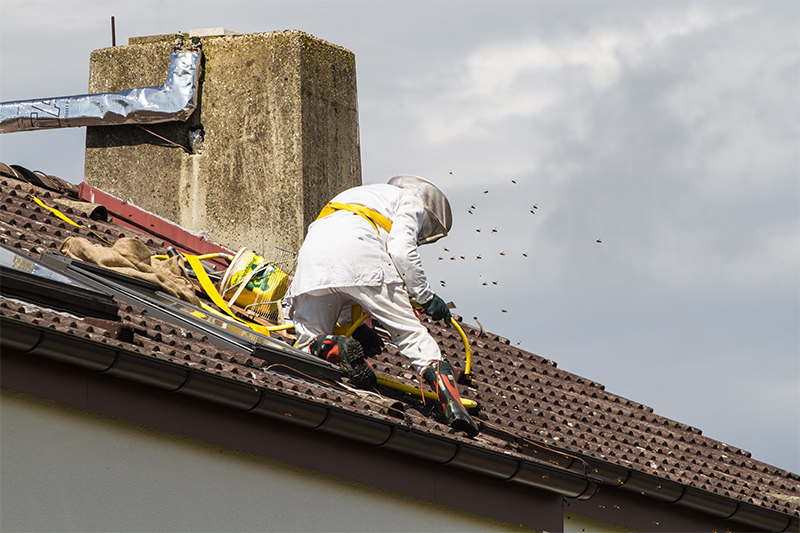 Bee Pest Control in Derby Derbyshire